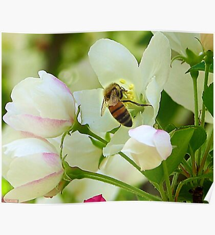 Spring May Flowers bring Pretty Bee's Poster