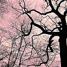 Silhouette of Twisting Branches Against a Sunset Sky by Jane Neill-Hancock