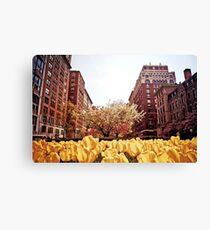 Spring - Park Avenue - New York City Canvas Print