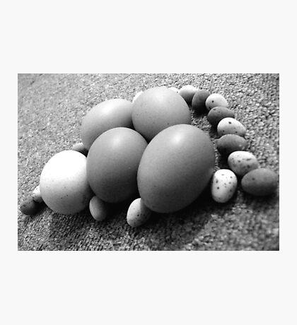 Eggs-Plane! Photographic Print