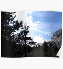 Shaded Trees Poster