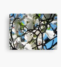 Signs of Spring in New York City  Canvas Print