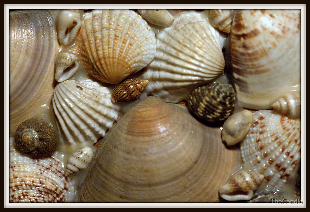 Sea Shells by TheCandle