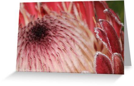 macro flora 012 by Karl David Hill