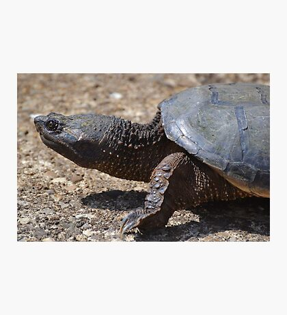 Moving At The Speed Of Turtle. Photographic Print