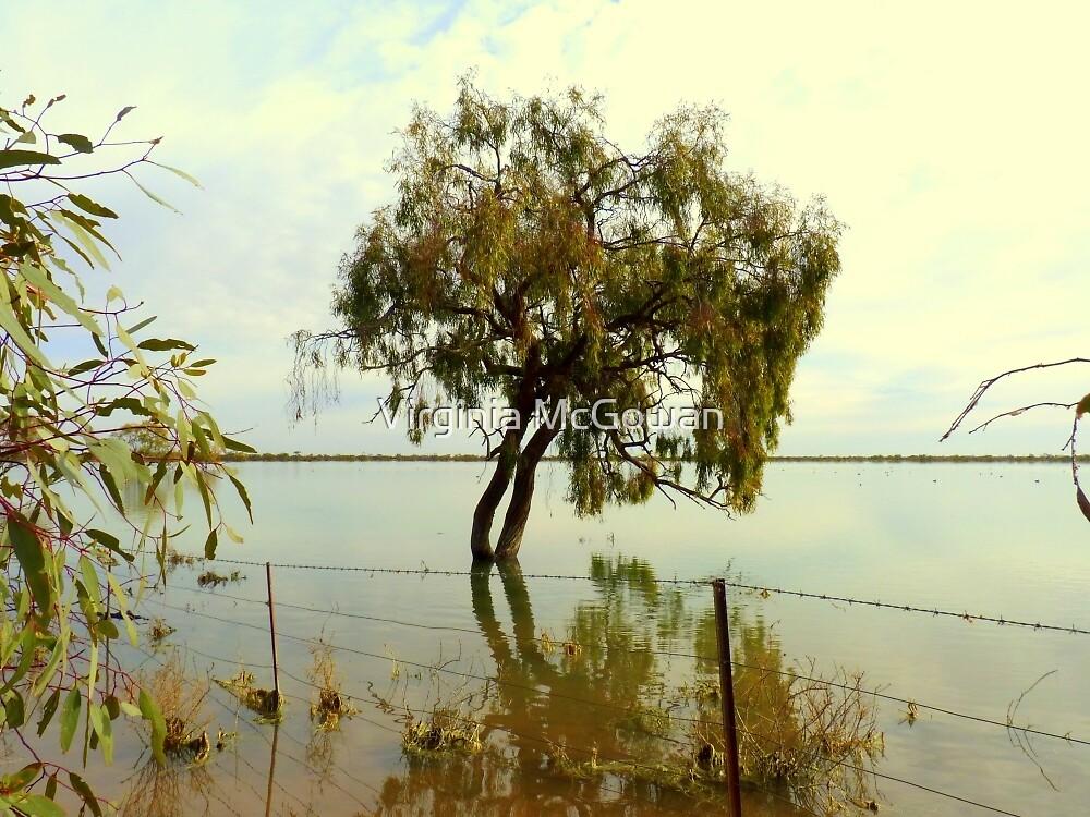 Waterways via West Wyalong NSW.Australia  by Virginia McGowan
