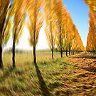 Autumn Illusion by Kym Howard