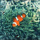 Clownfish by PhilM031