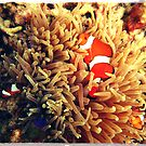 Clownfish with friends by PhilM031