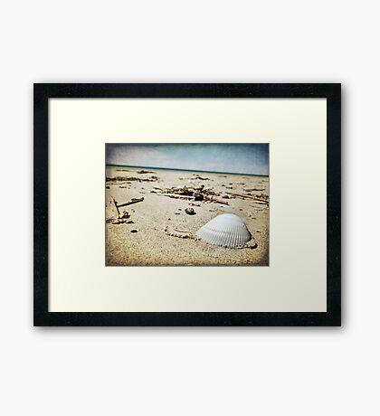 The Shell ~ Framed Print