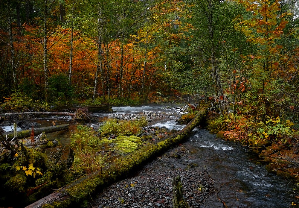 Fall On Roaring River by Charles & Patricia   Harkins ~ Picture Oregon
