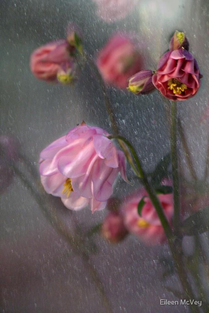 Pink Columbine by Eileen McVey