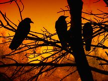 The Sunset Committee by shutterbug2010