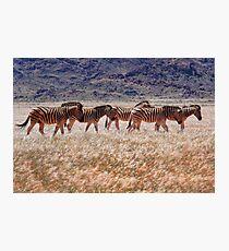 Mountain Zebras Photographic Print