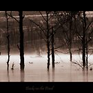 Ducks on the Pond by chloemay