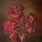 Old Roses by KarenM