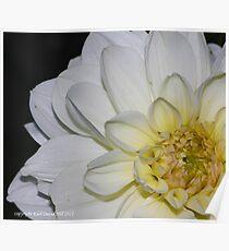 macro flora 013 Poster