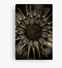 African Daisy in monochrome Canvas Print
