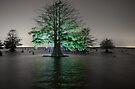 The Idea Tree by Troy Dalmasso