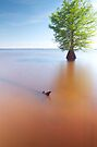 Zen Tree by Troy Dalmasso