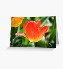 Full Bloomed Tulip Greeting Card
