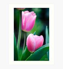 Hidden Tulips Art Print