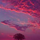 Blazing Double Tree by David Alexander Elder