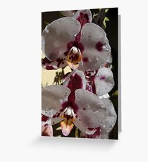 Orchids III - Orquídeas Greeting Card