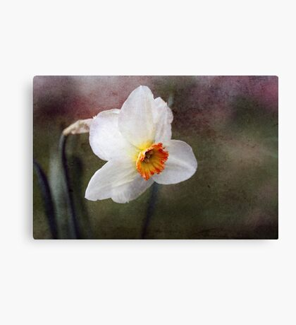 Spring came suddenly... Canvas Print