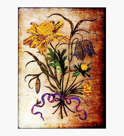 Helianthus Annuus (MSM #1) Photographic Print