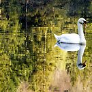 Yew Tree Swan by mikebov