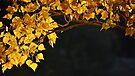 Golden Bower by Georgie Hart