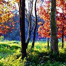 Autumn Colour by Gabrielle  Lees