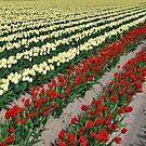 Spring on Flakkee 8 by Adri  Padmos