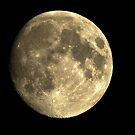 Hunters Moon  by vonniepyn
