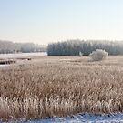 Freezing Mist & Snow by Robert Abraham