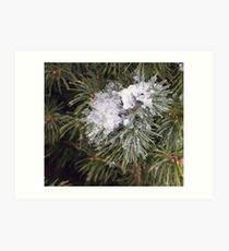 Pine,Snow and Ice Art Print