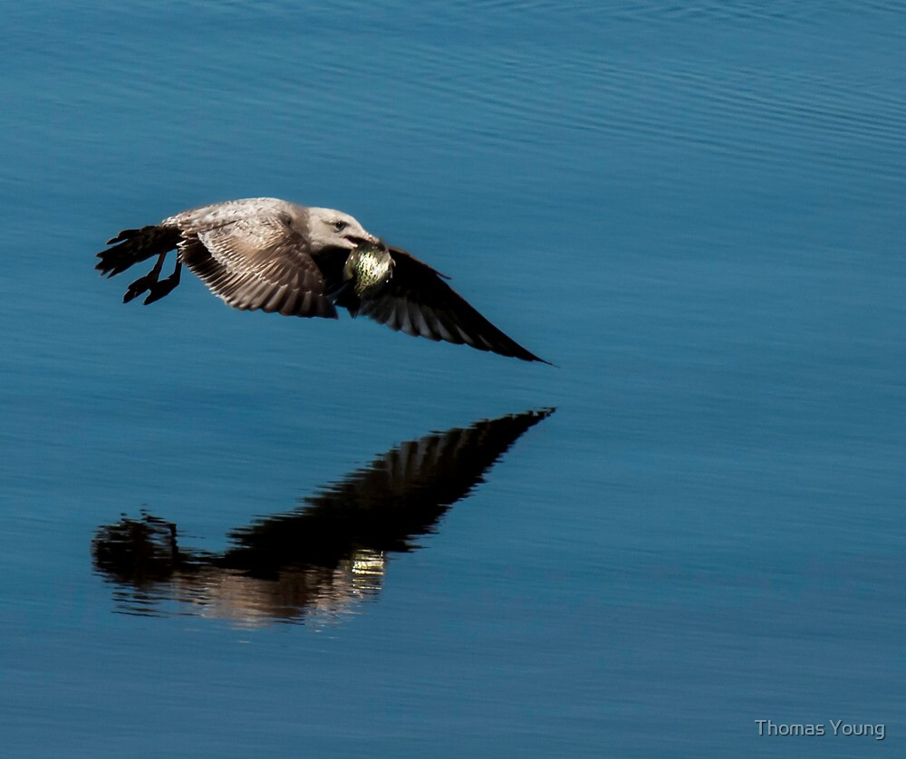 Dinner On The Fly by Thomas Young