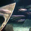 Fishy Blur by Jane Neill-Hancock