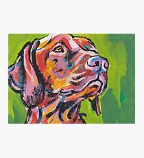 Vizsla Dog Bright colorful pop dog art Photographic Print