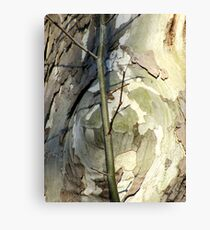 Sycamore sprout Canvas Print