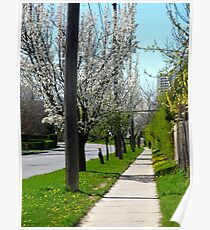 Walking down Spring lane Poster