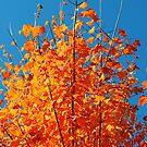 Burnt Orange Autumn by MissyD