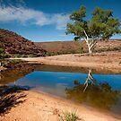 One Tree - Ross Graham Gorge Kalbarri by John Pitman
