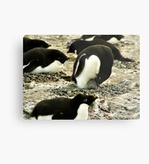 'Get Back in the Warm Chick': Adelie Penguin Metal Print