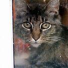 Shy kitty ... by Lynn Starner