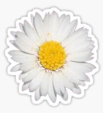 Nine Common Daisies Isolated on A Black Background Sticker
