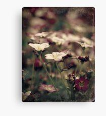 Bloom.... Canvas Print