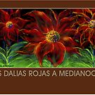 'Red Dahlias at Midnight' Spanish Titled Greeting Card or Small Print by luvapples downunder/ Norval Arbogast