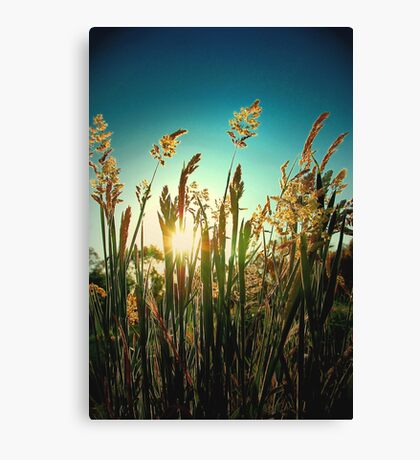 Golden moment.. Canvas Print